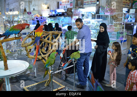 Doha  Qatar  Exotic birds for sale at Souq Waqif Stock Photo