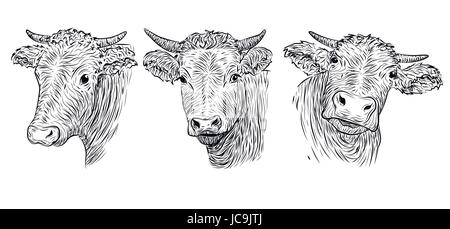 Cute cow face outline vector icon with color fill  Funny
