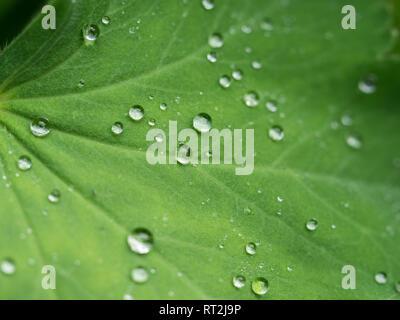 A Full Frame Macro Close Up Close Up Detail Of Dew Rain