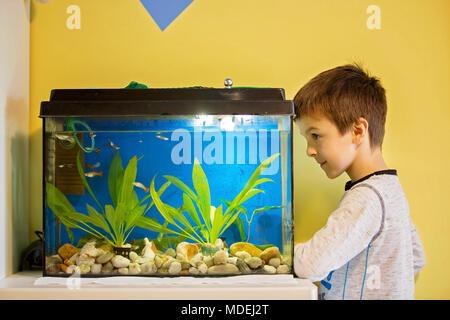 Kleines Kind, Fische in einem Aquarium, Aquarium zu Hause im ...