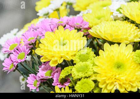 Malva Y Amarillo Los Crisantemos Ramo De Flores Arreglos